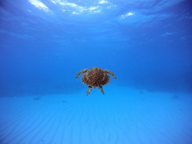 National Geographic Contest Photo - 10