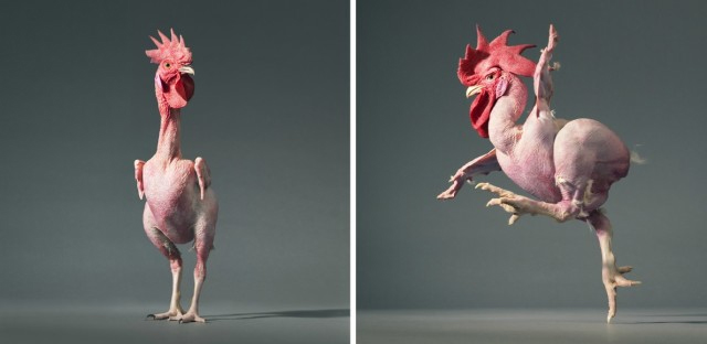 Chicken Dancing