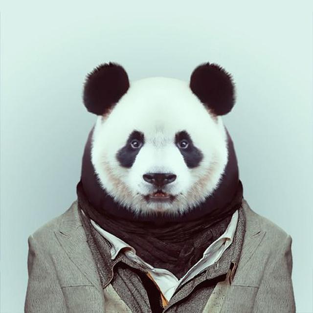 Panda in Suite