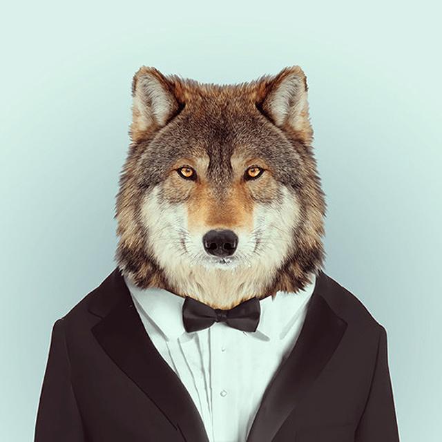 Wolf in Tuxedo