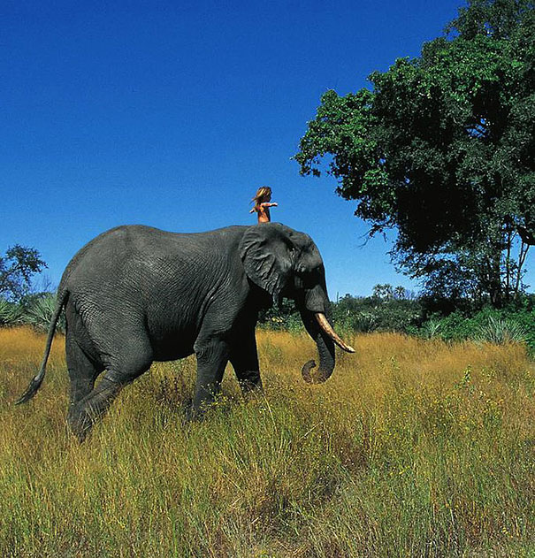 Tippi on Elephant