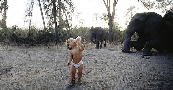 Tippi drinking milk with elephants