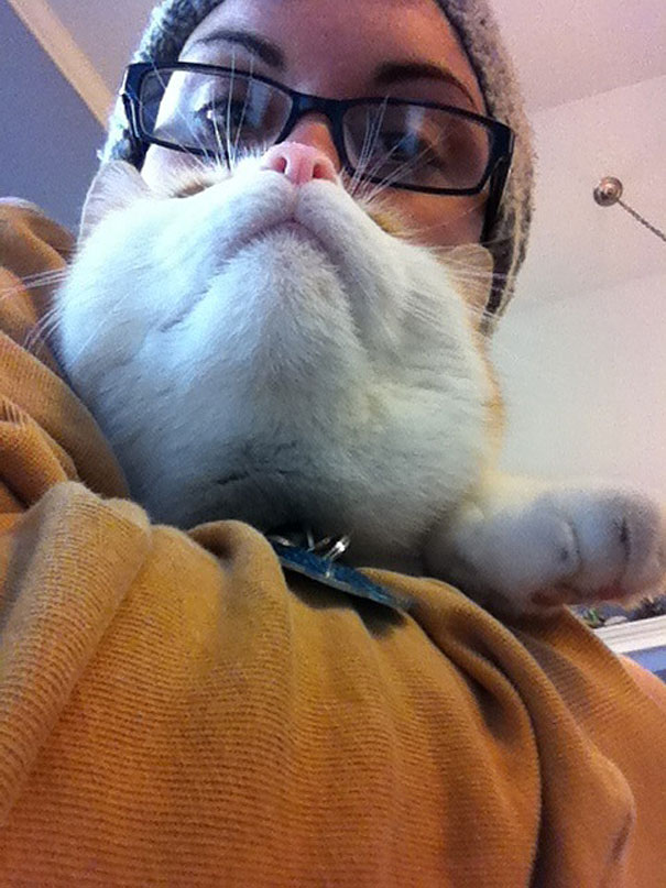 Cat Beard 10
