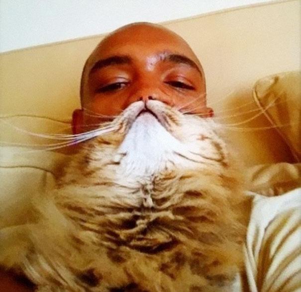 Cat Beard 11