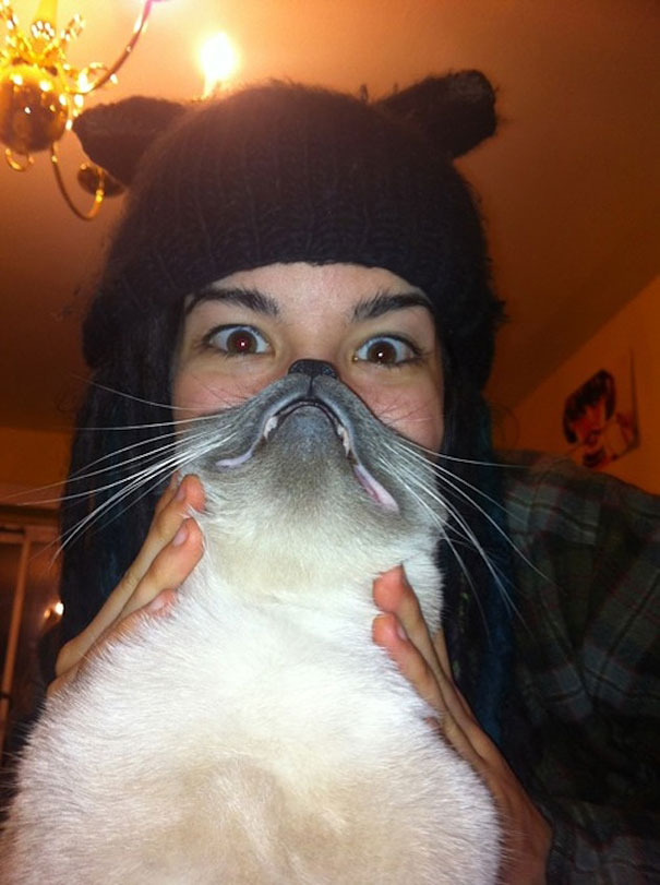 Having Cat Beards