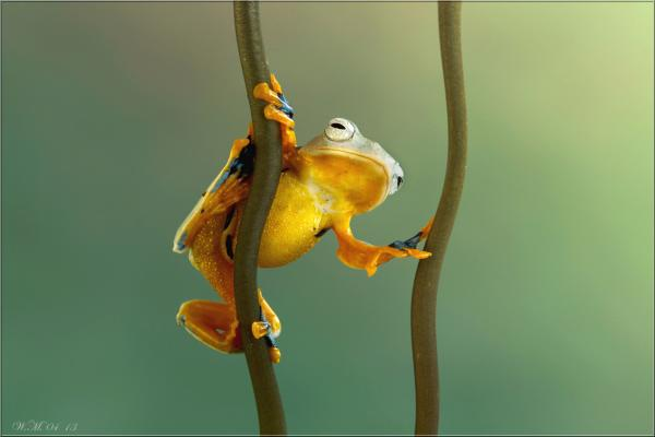 Frog Photography (10)