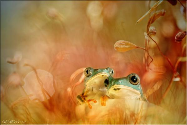 Frog Photography (11)