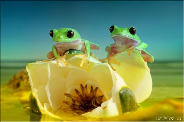 Frog Photography (12)