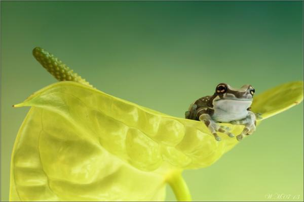 Frog Photography (3)