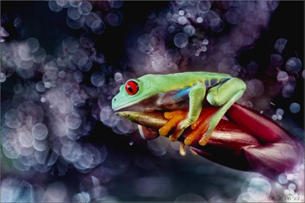 Frog Photography (4)
