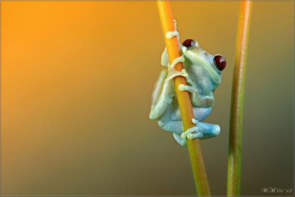 Frog Photography (6)