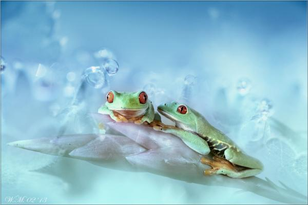 Frog Photography (8)