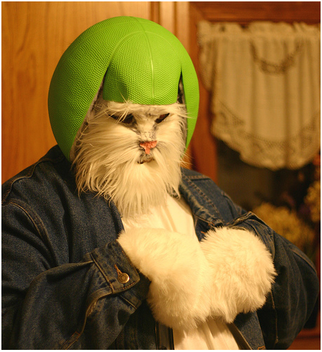 Helmet Cat Costume