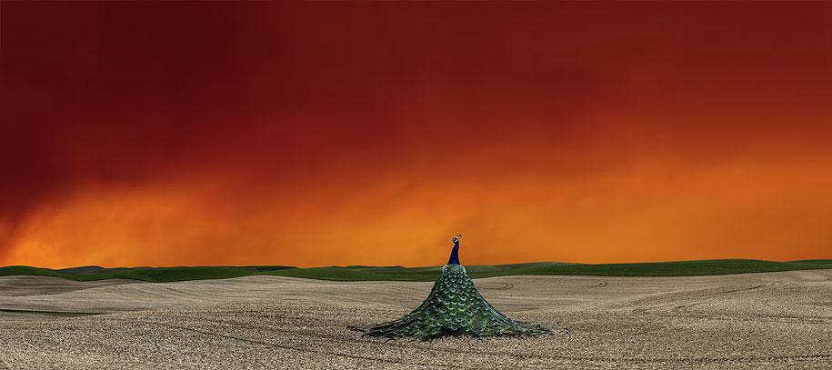 Farmland Landscapes by Lisa Wood