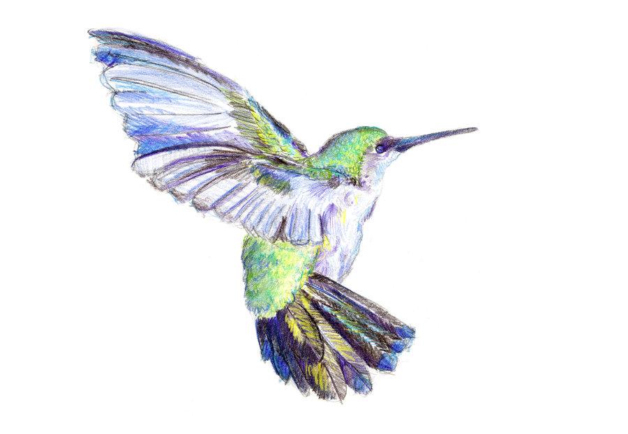 Hummingbird In Flight Tattoo Images