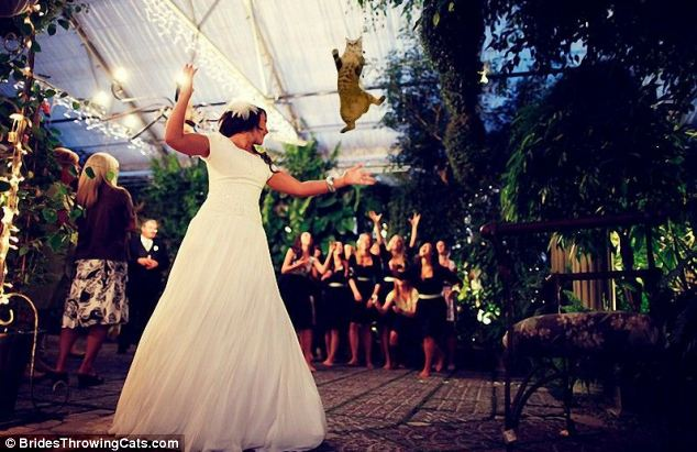 bride-throwing-cats-3