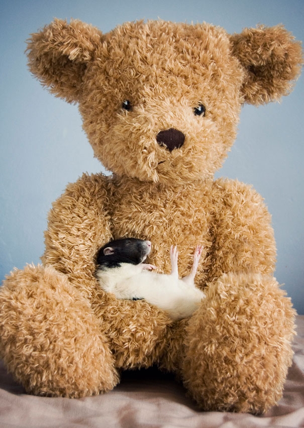 rats-and-teddy-bears-11