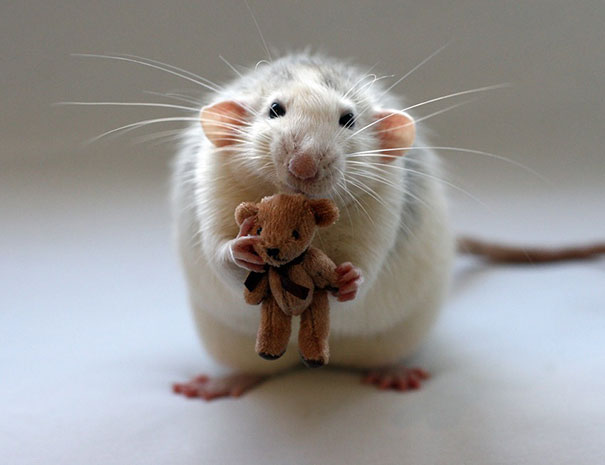 rats-and-teddy-bears-12