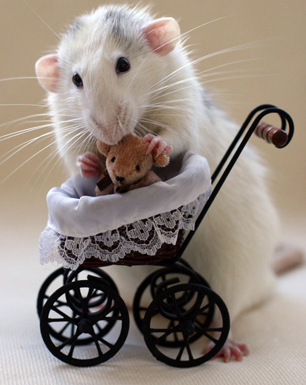 rats-and-teddy-bears-13