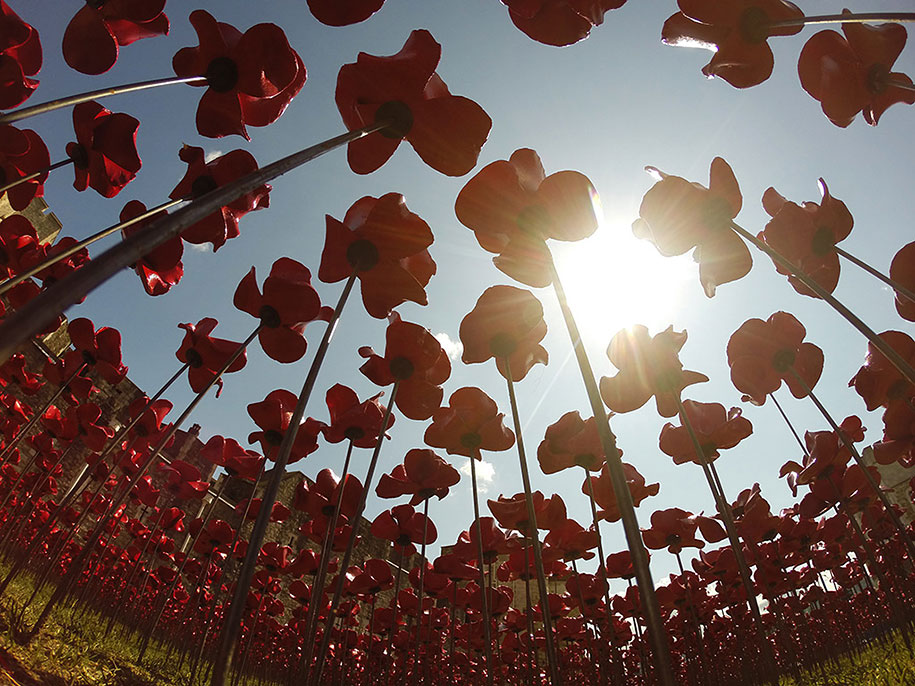 ceramic-poppies-installation-london-tower-10